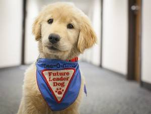 future_leader_dog